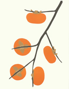 fruits_persimmons_433