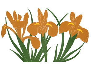 irisis_506_Brown-Iris_lrg